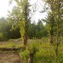 Пионерский лагерь Улыбка 02 июля 2011 года (25)
